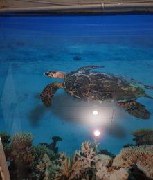 3д пол черепаха